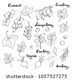 hand drawn painted set of... | Shutterstock . vector #1057527275