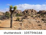 Small photo of Hiking trails abound in the otherworldly landscape of Joshua Tree National Park, California.