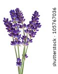 Lavender Flower Isolated On...