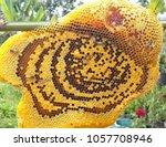 honey comb and bees | Shutterstock . vector #1057708946
