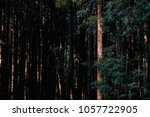 a beautiful pine trees forest... | Shutterstock . vector #1057722905