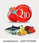 coenzyme q10. fundamentals of... | Shutterstock .eps vector #1057737698