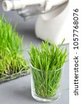 Small photo of Extraction of Wheatgrass on the kitchen using juicer. focus on glass with sprouts