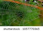 Drops Of Dew On Spider Web