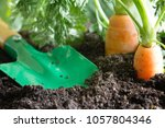 garden tools and carrot on the... | Shutterstock . vector #1057804346
