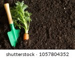 garden tools and carrot on the... | Shutterstock . vector #1057804352