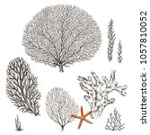 Collection Of Hand Drawn Corals ...