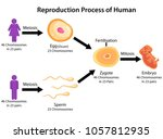 education chart of biology for... | Shutterstock .eps vector #1057812935