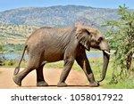 African Elephant Bull Crossing...