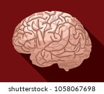 human brain isolated against... | Shutterstock .eps vector #1058067698