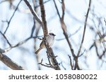 sparrow on the branch. sunny... | Shutterstock . vector #1058080022