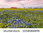 bluebonnets and red barn in... | Shutterstock . vector #1058086898