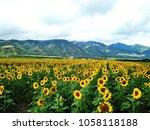 sunflower field in maui | Shutterstock . vector #1058118188