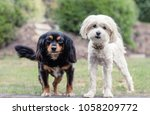 small mixed breed dog   Shutterstock . vector #1058209772