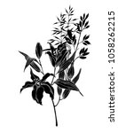 black lily with grass  hand... | Shutterstock .eps vector #1058262215