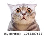 Stock photo young crazy surprised cat make big eyes closeup american shorthair surprised cat or kitten 1058307686