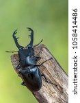 giraffe stag beetle  ...   Shutterstock . vector #1058414486