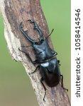 giraffe stag beetle  ...   Shutterstock . vector #1058414546