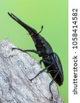 giraffe stag beetle  ...   Shutterstock . vector #1058414582