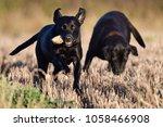 portrait of a playful black... | Shutterstock . vector #1058466908