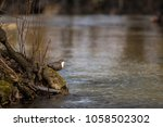 wildlife scene from nature. ... | Shutterstock . vector #1058502302