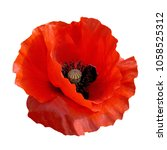 red poppy flower remembrance...