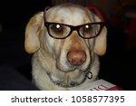 labrador marley   glass | Shutterstock . vector #1058577395