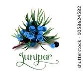 juniper berries for lables | Shutterstock .eps vector #1058624582