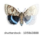 butterfly catocala fraxini.... | Shutterstock .eps vector #105863888