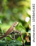 tropical lizard on tree | Shutterstock . vector #1058641682