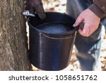 collecting maple sap from tree | Shutterstock . vector #1058651762