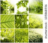 Collage Of Green Grass And...