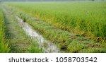 a paddy feild | Shutterstock . vector #1058703542