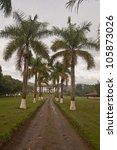 Boulevard of palm trees - stock photo