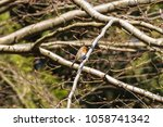 a small bird in the woods | Shutterstock . vector #1058741342