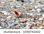 close up sea shell on the sand... | Shutterstock . vector #1058742602