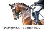 equestrian sport portrait  ... | Shutterstock . vector #1058844572