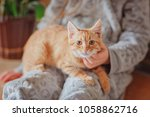 red haired kitten in the hands... | Shutterstock . vector #1058862716