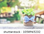 beautiful flower or plant in a... | Shutterstock . vector #1058965232