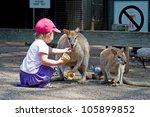 Toddler Girl Feeding A Kangaro...