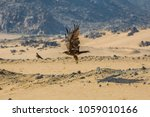 eastern imperial eagle takeoff  | Shutterstock . vector #1059010166