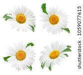 set of daisy flower with leaves ... | Shutterstock . vector #1059077615