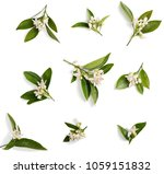 top view of blossoming branches ... | Shutterstock . vector #1059151832