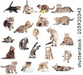 Stock photo collection of funny playful cat kitten isolated on white background 105920345