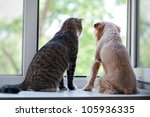 Stock photo striped gray cat and dog sitting on the window 105936335