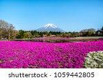 pink moss in shibazakura  lawn... | Shutterstock . vector #1059442805