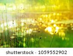 green yellow gold summer nature ... | Shutterstock . vector #1059552902