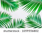 palm leaves on a white... | Shutterstock . vector #1059556802