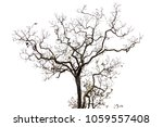 isolated tree on white... | Shutterstock . vector #1059557408