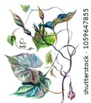 botanical illustration ... | Shutterstock . vector #1059647855